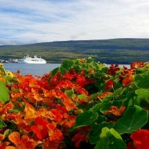 Blüten in Akureyri