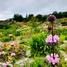 Bunte Blütenpracht in Tromsø - Botanischer Garten