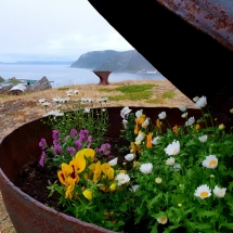 Bunter Blumenkübel in Wanderweg in Honningsvåg