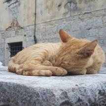 Katze in Kotor Montenegro